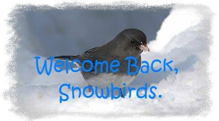 A snowbird